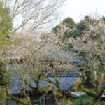 隣家が空き家でも越境してきた庭木を勝手に切ると、厄介なことに